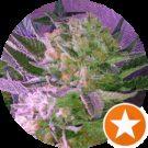 indoorgrower 4. Avatar